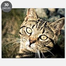 Domestic Cat Puzzle