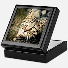 Domestic Cat Keepsake Box