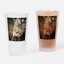 Domestic Cat Drinking Glass