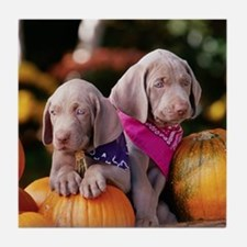 Weimaraner Puppies and Pumpkins Tile Coaster