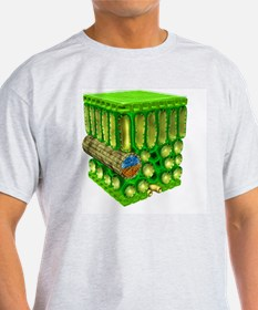 Illustration of cross-section throug T-Shirt