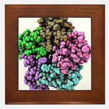 Shiga-like toxin I subunit molecule Framed Tile