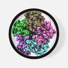 Shiga-like toxin I subunit molecule Wall Clock