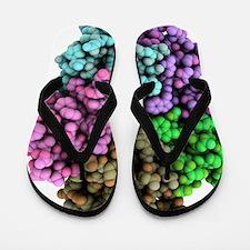 Shiga-like toxin I subunit molecule Flip Flops