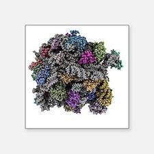 """Ribosomal subunit, molecula Square Sticker 3"""" x 3"""""""