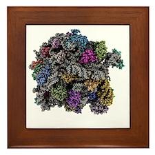 Ribosomal subunit, molecular model Framed Tile