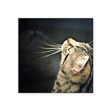 "Cute Tabby cat Square Sticker 3"" x 3"""