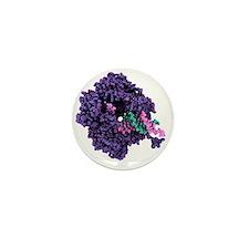 RNA polymerase alpha subunit Mini Button