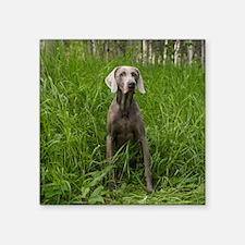 "Portrait of Dog Square Sticker 3"" x 3"""
