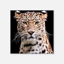 "Cute Animal body part Square Sticker 3"" x 3"""