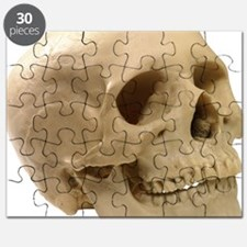 Model of a skull Puzzle