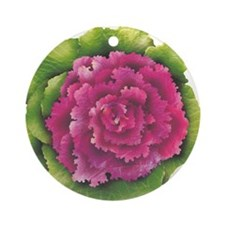 An ornamental cabbage Round Ornament