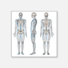 "Male skeleton, computer art Square Sticker 3"" x 3"""