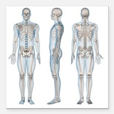 "Male skeleton, computer  Square Car Magnet 3"" x 3"""