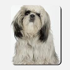 Portrait of Tibetan terrier puppy Mousepad