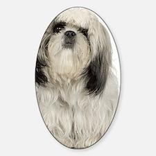 Portrait of Tibetan terrier puppy Sticker (Oval)