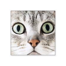 """Cat, close-up Square Sticker 3"""" x 3"""""""