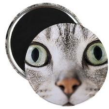 Cat, close-up Magnet