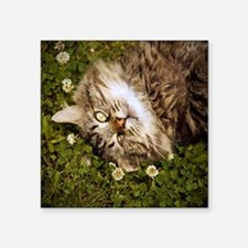 """A brown long-haired tabby c Square Sticker 3"""" x 3"""""""