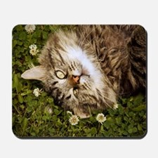 A brown long-haired tabby cat laying on  Mousepad