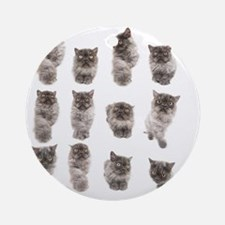 One cat, many portraits Round Ornament
