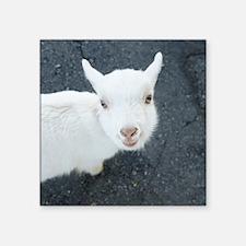 "Curious white goat Square Sticker 3"" x 3"""