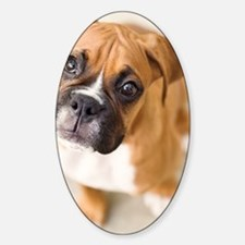 Boxer puppy looking up at camera. Sticker (Oval)