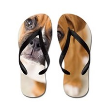 Boxer puppy looking up at camera. Flip Flops