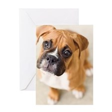 Boxer puppy looking up at camera. Greeting Card