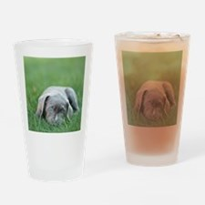 Blue eyed puppy resting on grass. Drinking Glass