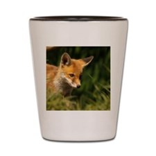 A young Red Fox cub peering through a g Shot Glass