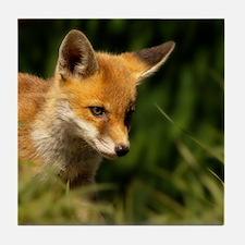 A young Red Fox cub peering through a Tile Coaster
