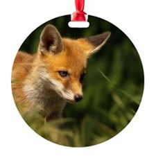 A young Red Fox cub peering through Ornament