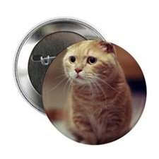 """Cat with curious and big eyes staring 2.25"""" Button"""