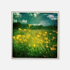 "Buttercups in field Square Sticker 3"" x 3"""