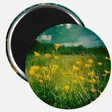 Buttercups in field Magnet