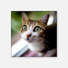 "Cat green big eyes. Square Sticker 3"" x 3"""
