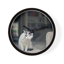 Cat looking through window at birds. Wall Clock
