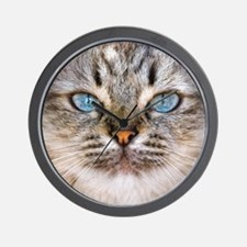 Beautiful blue eyes of a longhaired cat Wall Clock