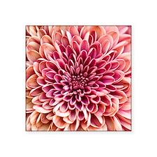 "Close up of chrysanthemum. Square Sticker 3"" x 3"""