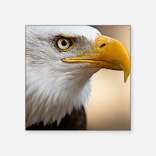 """Close portrait of Bald eagl Square Sticker 3"""" x 3"""""""