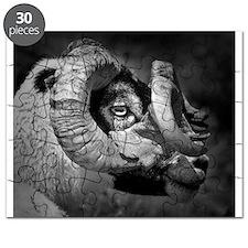 Black and white image of ram, UK. Puzzle
