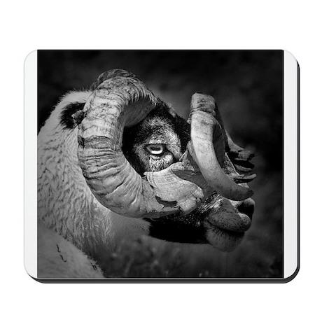 Black and white image of ram, UK. Mousepad