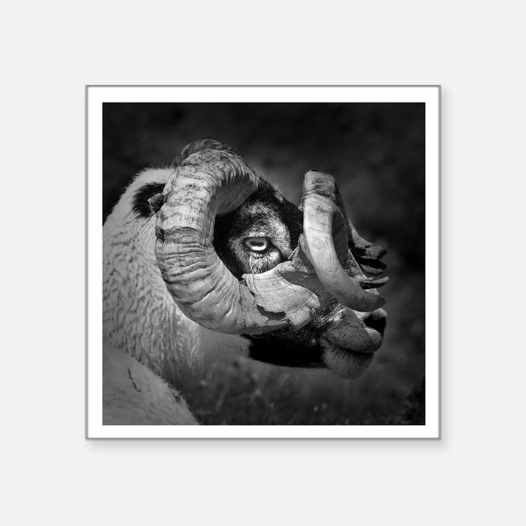 "Black and white image of ra Square Sticker 3"" x 3"""