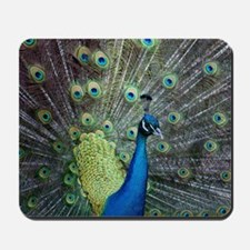 Close up of peacock showing its beautifu Mousepad
