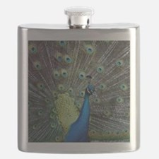 Close up of peacock showing its beautiful fe Flask