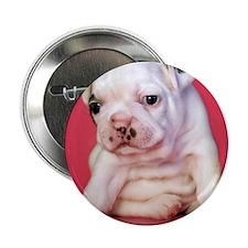 """Close up of white bulldog puppy sitti 2.25"""" Button"""