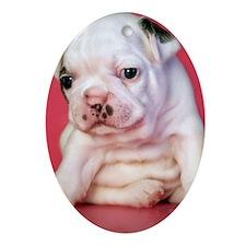 Close up of white bulldog puppy sitt Oval Ornament