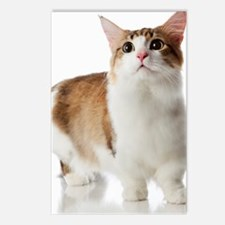 Cat with short legs Postcards (Package of 8)