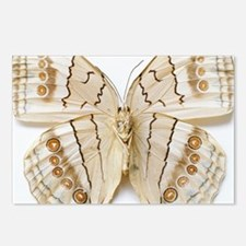 Brown Butterfly, overhead Postcards (Package of 8)